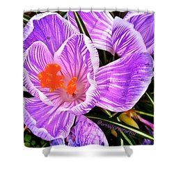 Awakening #flowers #spring #bulbs Shower Curtain