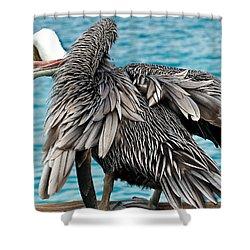 Awkward Pelican Shower Curtain by Jean Noren