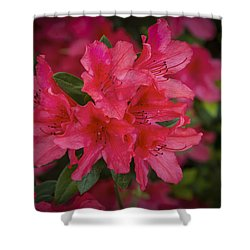 Azaleas 1 Shower Curtain
