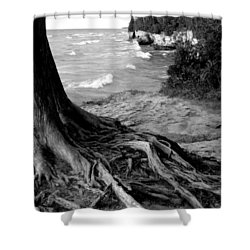 B And W Cedar Roots At Cave Point Shower Curtain