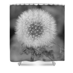 B And W Seed Head Shower Curtain