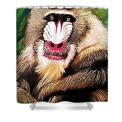 Baboon Stare Shower Curtain by Renee Michelle Wenker
