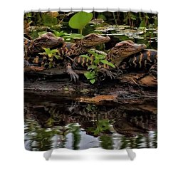Baby Alligators Reflection Shower Curtain