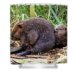 Baby Beaver With Mother Shower Curtain by Peggy Collins