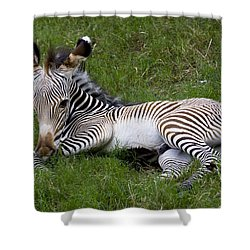 Shower Curtain featuring the photograph Baby Black And White Beauty by Ruth Jolly