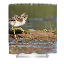 Baby Black-necked Stilt Exploring Shower Curtain