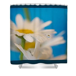 Baby Blue Triptych Shower Curtain by Lisa Knechtel