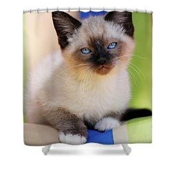 Shower Curtain featuring the photograph Baby Blues by Melanie Lankford Photography