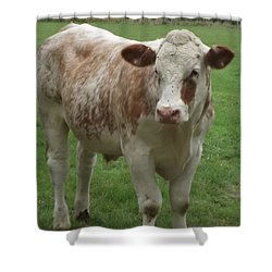 Baby Bull 2 Shower Curtain by John Williams