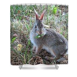 Baby Bunny Eating Dandelion #02 Shower Curtain by Ausra Huntington nee Paulauskaite
