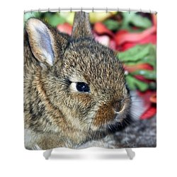 Baby Bunny Rabbit Shower Curtain by Karon Melillo DeVega