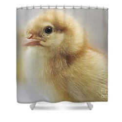 Baby Chicken Shower Curtain