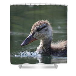 Baby Duck Shower Curtain by Cathie Douglas