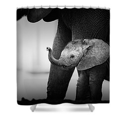 Baby Elephant Next To Cow  Shower Curtain by Johan Swanepoel