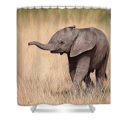 Elephant Calf Painting Shower Curtain