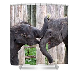 Baby Elephants - Bowie And Belle Shower Curtain by Pamela Critchlow
