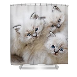 Baby Faces Shower Curtain by Lori Deiter