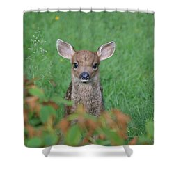 Shower Curtain featuring the photograph Baby Fawn In Yard by Kym Backland
