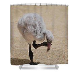 Baby Flamingo Shower Curtain by DejaVu Designs