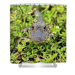 Baby Gator Shower Curtain by Adam Jewell
