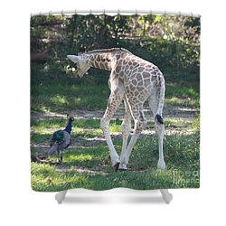 Baby Giraffe And Peacock Out For A Walk Shower Curtain