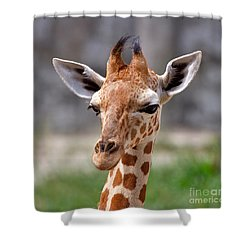 Baby Giraffe Shower Curtain by Louise Heusinkveld