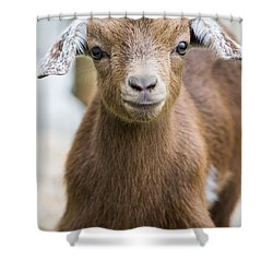 Baby Goat Shower Curtain by Shelby  Young
