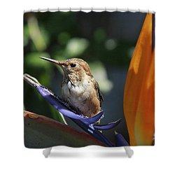 Baby Hummingbird On Flower Shower Curtain