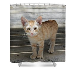 Baby Kitty Shower Curtain by Catie Canetti