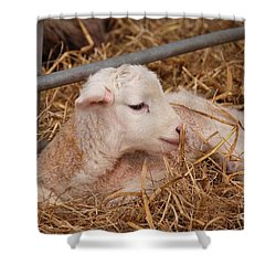 Baby Lamb Shower Curtain