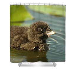 Shower Curtain featuring the photograph Baby Loon by James Peterson