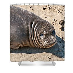 Baby Northern Elephant Seals Mirounga Angustirostris At The Piedras Blancas Beach Shower Curtain by Jamie Pham