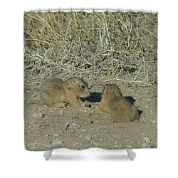 Baby Prairie Dog Shower Curtain