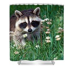 Baby Raccoon Shower Curtain