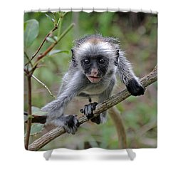 Baby Red Colobus Monkey Shower Curtain