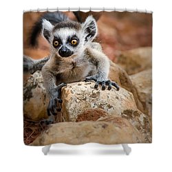 Baby Ringtail Lemur Shower Curtain