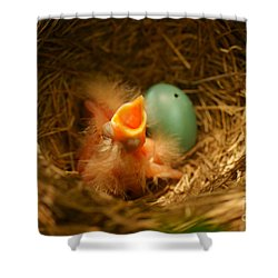 Baby Robins1 Shower Curtain