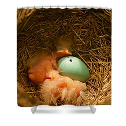 Baby Robins2 Shower Curtain