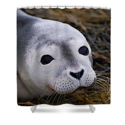 Baby Seal Shower Curtain by DejaVu Designs