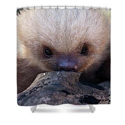 Baby Sloth 2 Shower Curtain by Heiko Koehrer-Wagner