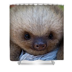 Baby Sloth Shower Curtain by Heiko Koehrer-Wagner