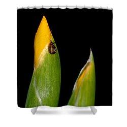 Baby Snail On Yellow Iris Bud Shower Curtain