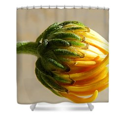 Shower Curtain featuring the photograph Baby Spider Mum by Deb Halloran