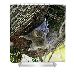 Shower Curtain featuring the photograph Baby Squirrel On The Loose by Trina  Ansel