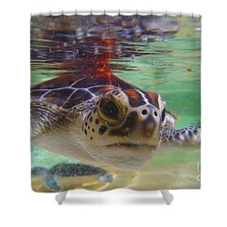 Baby Turtle Shower Curtain by Carey Chen