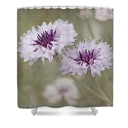 Bachelor Buttons - Flowers Shower Curtain by Kim Hojnacki