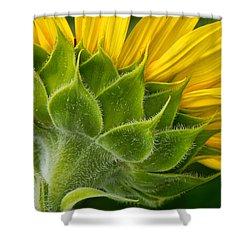 Back Of Sunflower Shower Curtain