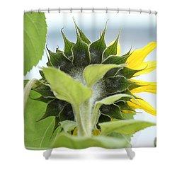 Rear View Image Shower Curtain by E Faithe Lester