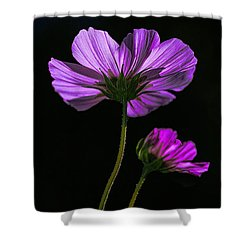 Backlit Blossoms Shower Curtain