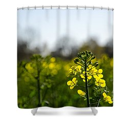 Shower Curtain featuring the photograph Backlit Canola Flower by Kennerth and Birgitta Kullman